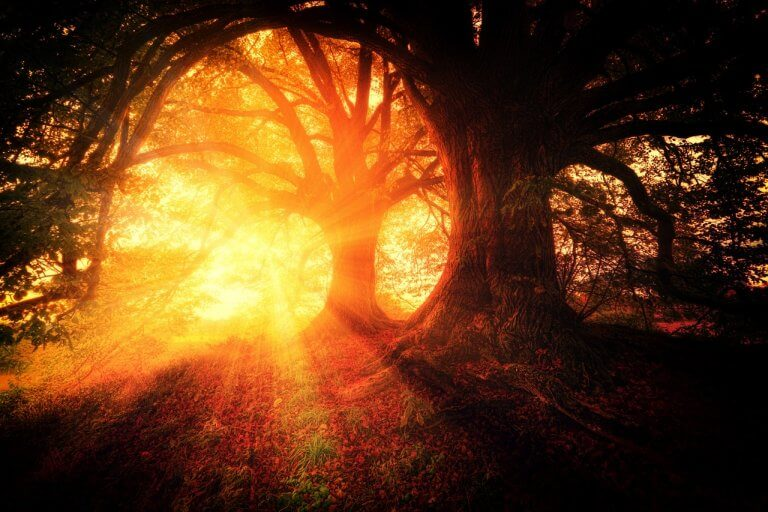 New Day Dawning: 9-9-9 and Your New Reality
