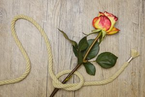 transformation knot rose
