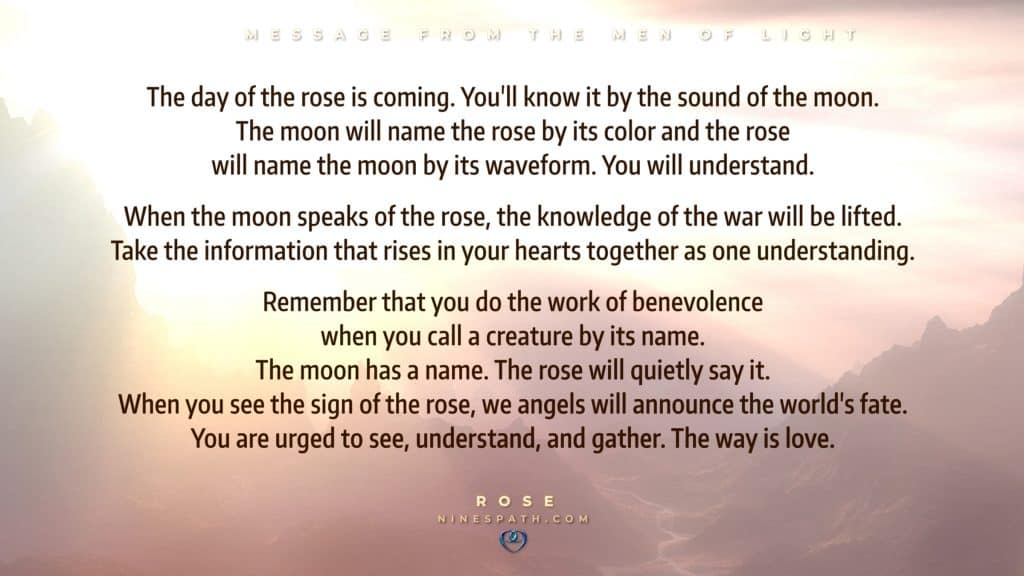 Nine's Path Men of Light rose