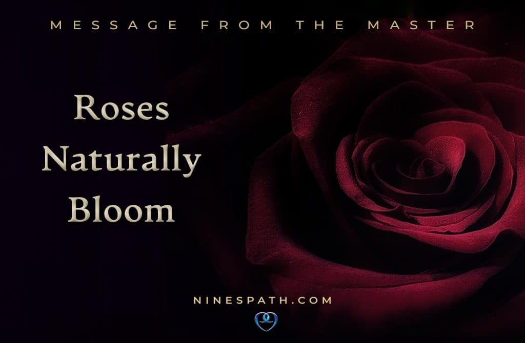 Roses Naturally Bloom